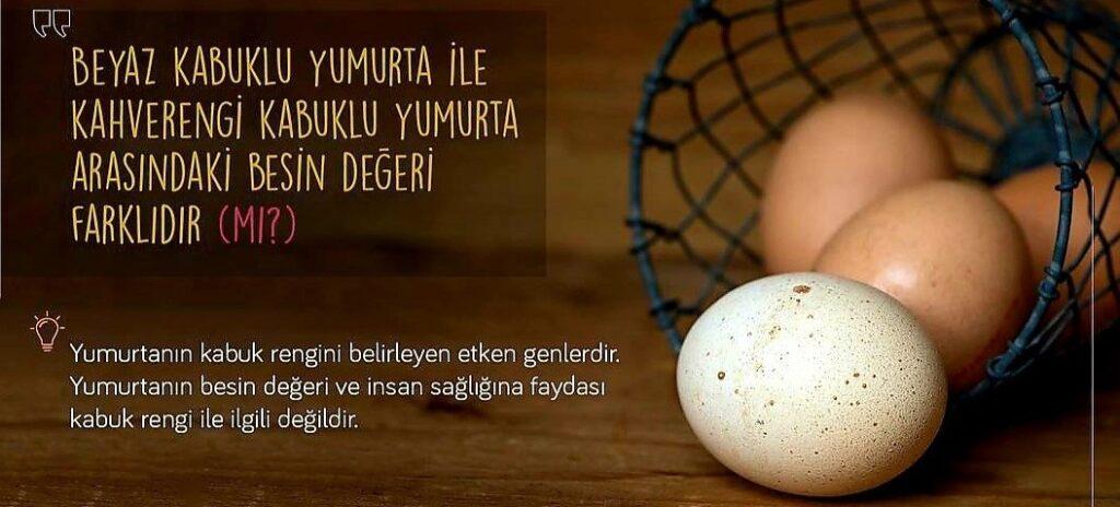 Siz beyaz kabuklu yumurta mı, yoksa kahverengi kabuklu yumurta mı tercih edersiniz?